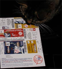 My cat, Tai Gau, stares at our postseason tickets and contemplates the matchups he'd like to see...